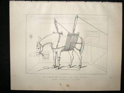 Miles Practical Farriery C1875 Antique Print. Method of Slinging The Horse | Albion Prints